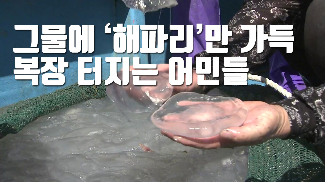 [자막뉴스] 그물에 '해파리'만 가득...복장 터지는 어민들