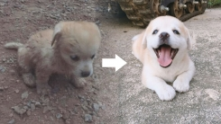 강물에 떠내려가다 구조된 강아지 '인절미' SNS 개설 화제