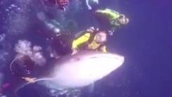 고래상어 등에 올라탄 남성 '비난 쇄도'