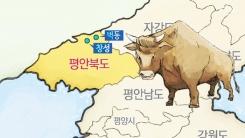 '벽창(碧昌)호' 소와 상관이 있다?