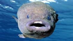 '멍텅구리', 원래는 물고기를 일컫는 말?
