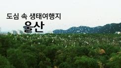 도심 속 생태여행지 '울산'