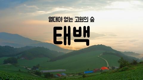 [YTN 구석구석 코리아] 열대야 없는 고원의 숲, 태백