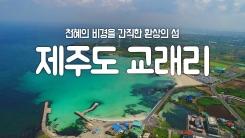 [YTN 구석구석 코리아] 천혜의 비경을 간직한 환상의 섬, 제주도 교래리
