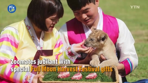 Chuseok Gifts for Zoomates