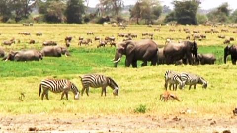 탄자니아 야생동물 습격 주의