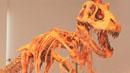 7천만 년 전 공룡 고향 품으로!