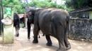 종이로 변신한 코끼리 똥