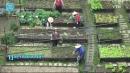 [세상교과서] '녹색 도시 만들기' 타이베이의 도전!
