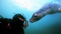 [YTN 스페셜] 공존의 바다 1부 : 내 친구 점박이 물범