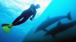 [YTN 스페셜] 공존의 바다 2부 : 돌고래와 해녀할망