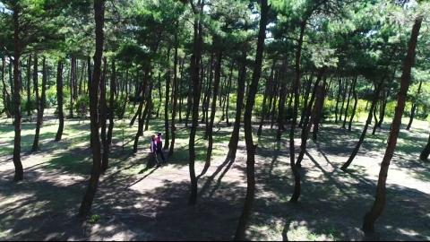 [수목원 산책] 울산테마식물수목원