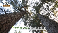 [수목원산책] 장흥자생수목원