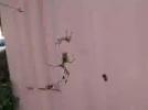 [신기한자연]같은 거미줄에 사는 거미