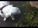 [사고현장]개 풀뜯어 먹는 소리 장면