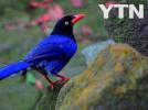 [신기한자연]태국 에서만서식하는  새   ...