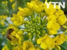 [신기한자연]꿀벌은 일하는 중!