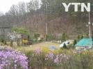 [기타]봄을 알리는 봄꽃들