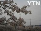 [기타]봄이 오는 사진