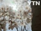[기타]속적삼 같은  꽃그늘