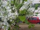 [신기한자연]봄봄봄라일락꽃 향기맡으며
