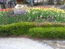 [신기한자연]봄
