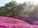 [기타]봄나들이 하기 좋은 서동 공원