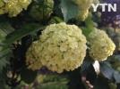 [신기한자연]재미있게 생긴 꽃이예요
