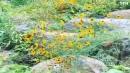[기타]산들산들 노란봄꽃