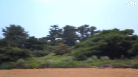 [신기한자연] 천연기념보호종 황새 출현