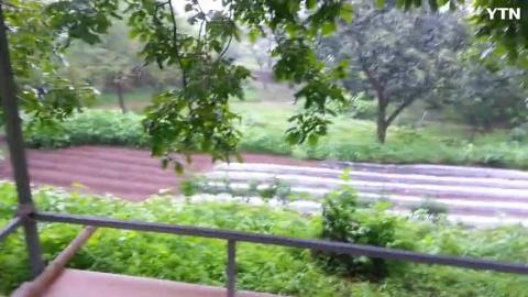 [순간포착] 비오는날 처마밑 개구리