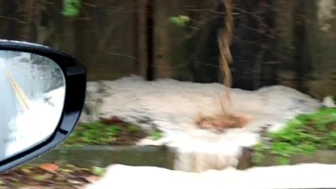 불법 폐수 방류 영상
