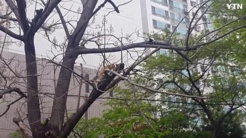 까치에게 공격당하는 나무 위 고양이