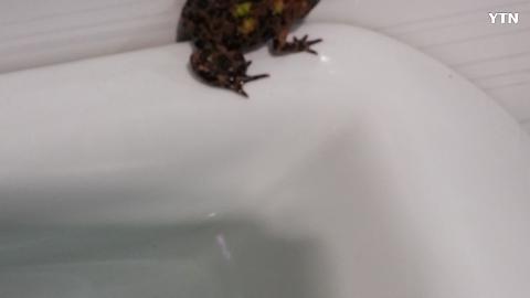 [기타] 이상한 두꺼비? 개구리