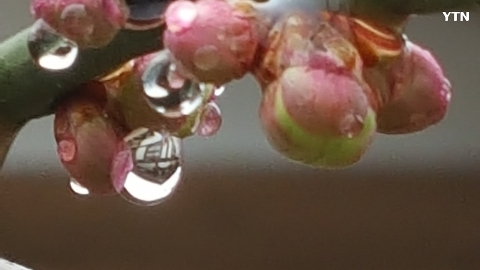 [신기한자연] 물방울과꽃망울