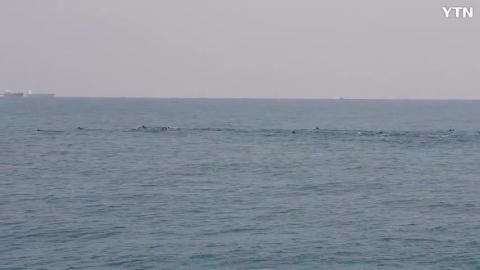 [순간포착] 부산 나무섬 동쪽 돌고래떼