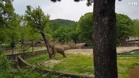 [순간포착] 코끼리영상2
