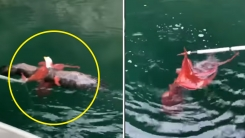문어에게 잡혀 익사할 뻔한 독수리 구조한 어민들