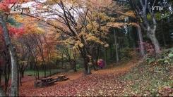 숲속의 대한민국 3회