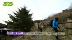 [삼삼오오 우리 숲 이야기] 구상나무, 까마귀