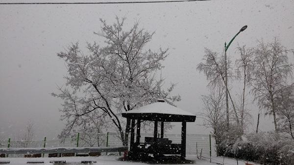 '꽃잎 대신 눈발' 4월 중순 눈덮인 강원도