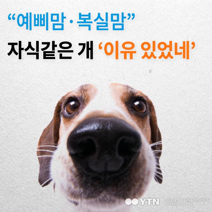 [한컷뉴스] 예삐맘·복실맘…자식같은 개 '이유 있었네'