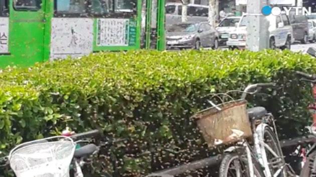 [영상] '다시 시작된 벌과의 전쟁' 정류장 옆 벌집 제거