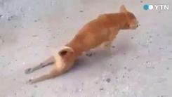 [영상] '카이저소제 진돗개' 소름 돋는 연기력