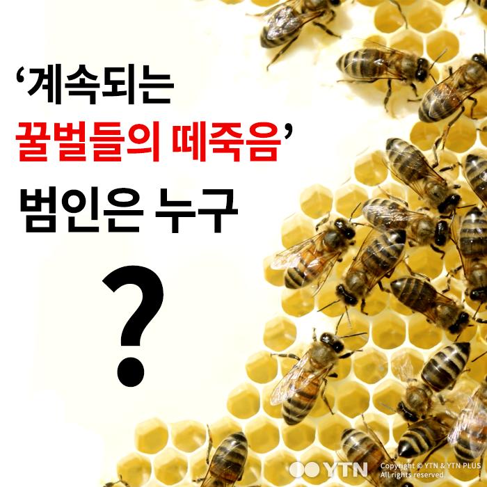 [한컷뉴스] '계속되는 꿀벌들의 떼죽음' 범인은 누구?