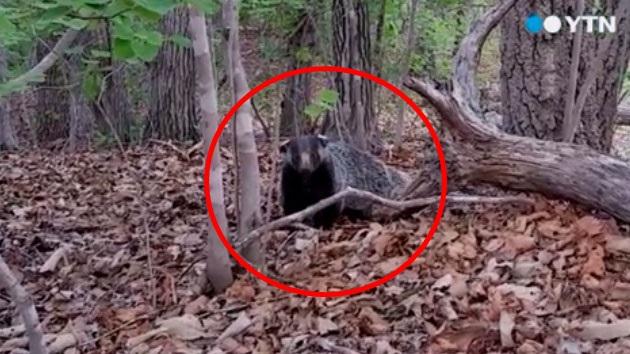 [제보영상] 태백산에 생명체가 나타났다