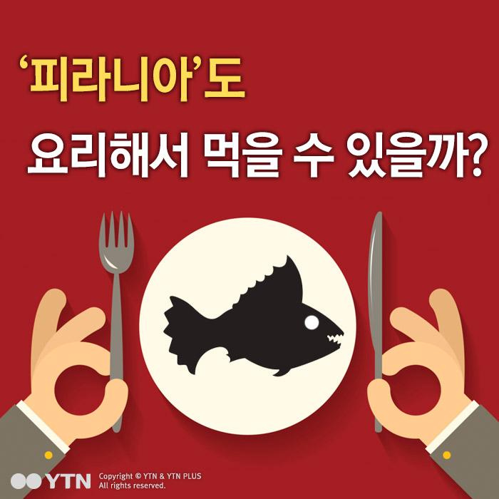 [한컷뉴스] '피라니아'도 요리해서 먹을 수 있을까?