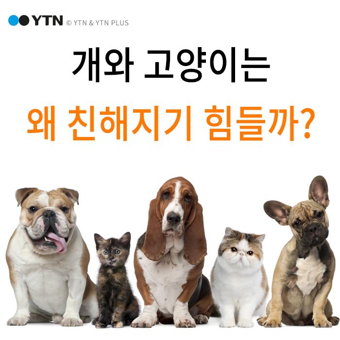 [한컷뉴스] '내가 신·주인이 신' 고양이·개가 안 친한 이유