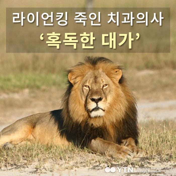 [한컷뉴스] 라이언킹 사냥한 치과의사 '혹독한 대가'