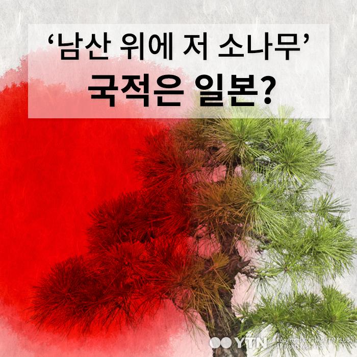 [한컷뉴스] '남산 위에 저 소나무' 국적은 재패니즈?